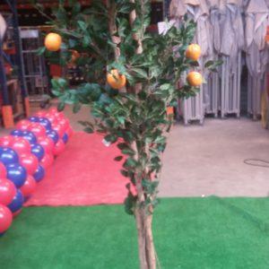 Sinasappelboom-2