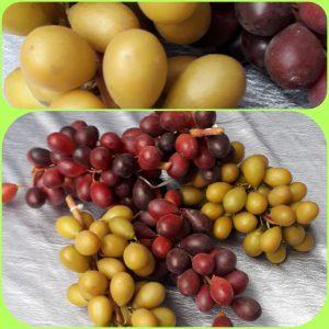 Tros Druiven (set van 5 tros)