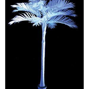 Palmboom Wit