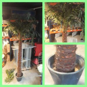 Palmboom groot 4,5 meter